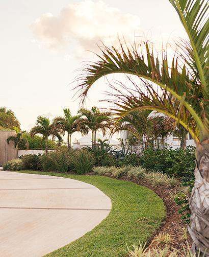 mulched driveway with palm trees