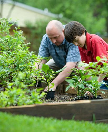 father and son working in garden, mulch, plants, planter